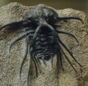 Scary ancient insect