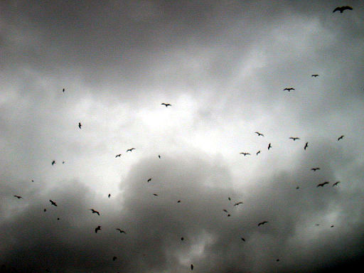 Birds against darkened sky