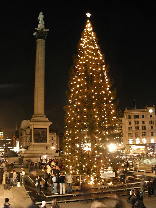 Norway's Christmas Tree I Oxford Open Learning