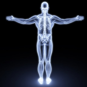 Xray view of the Human Body