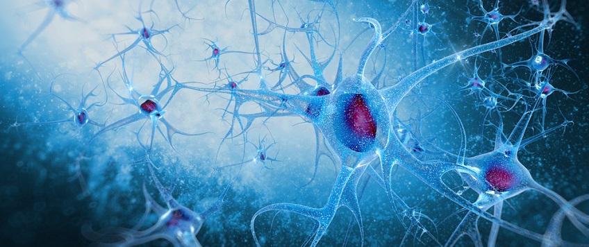 a Biology A level representation of neurons